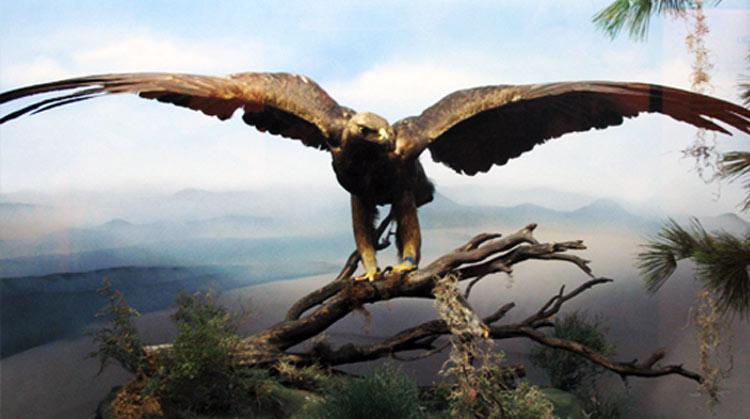 Simbologia-de-las-aves-en-la-Biblia